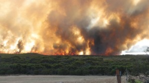 esperance mallee burning