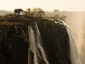 An bull African elephant feeding at the precipice of Victoria Falls.